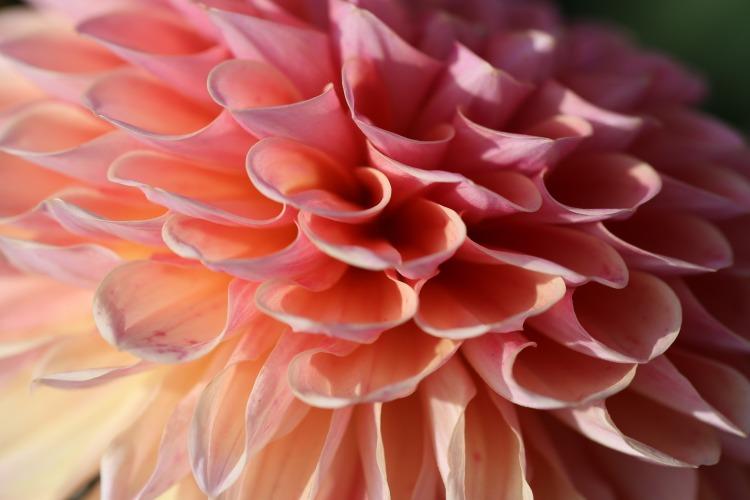 flower-936898_1920