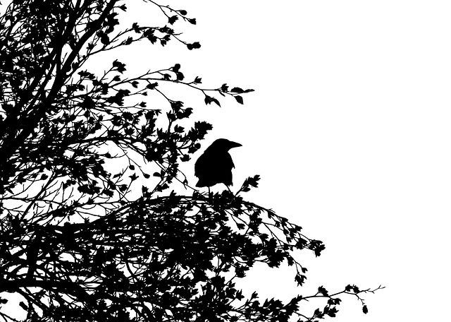 bird-1778749_640