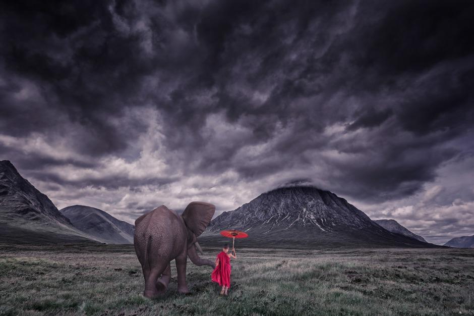 elephant-1873439_1920.jpg