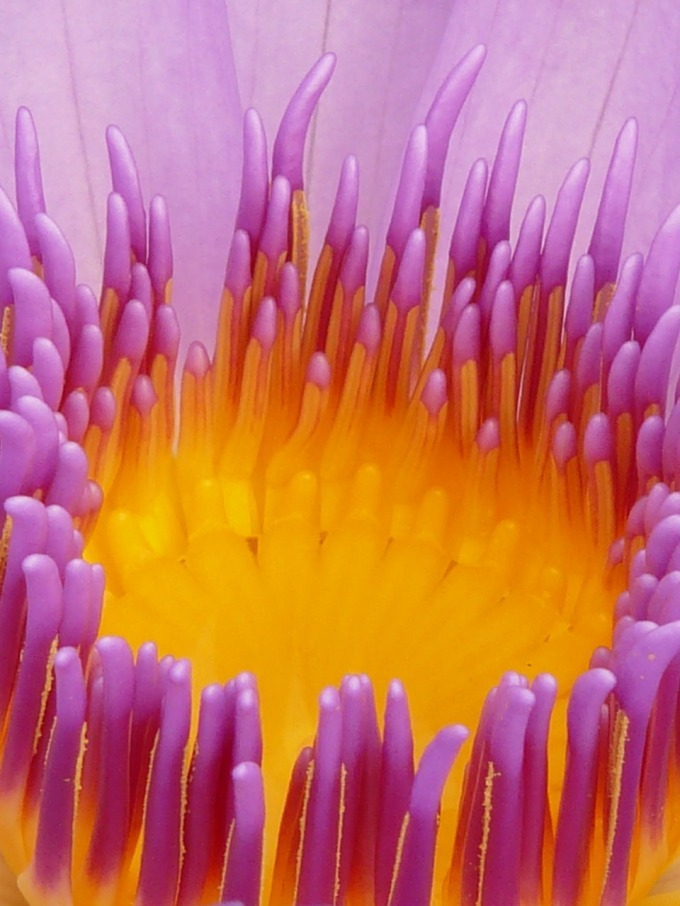 water-lily-4462_1280.jpg