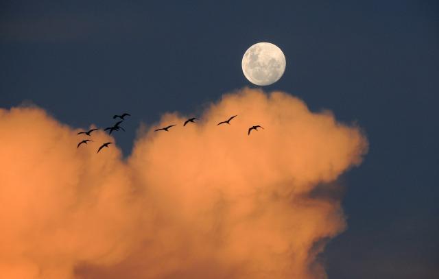 moon-323425_1920