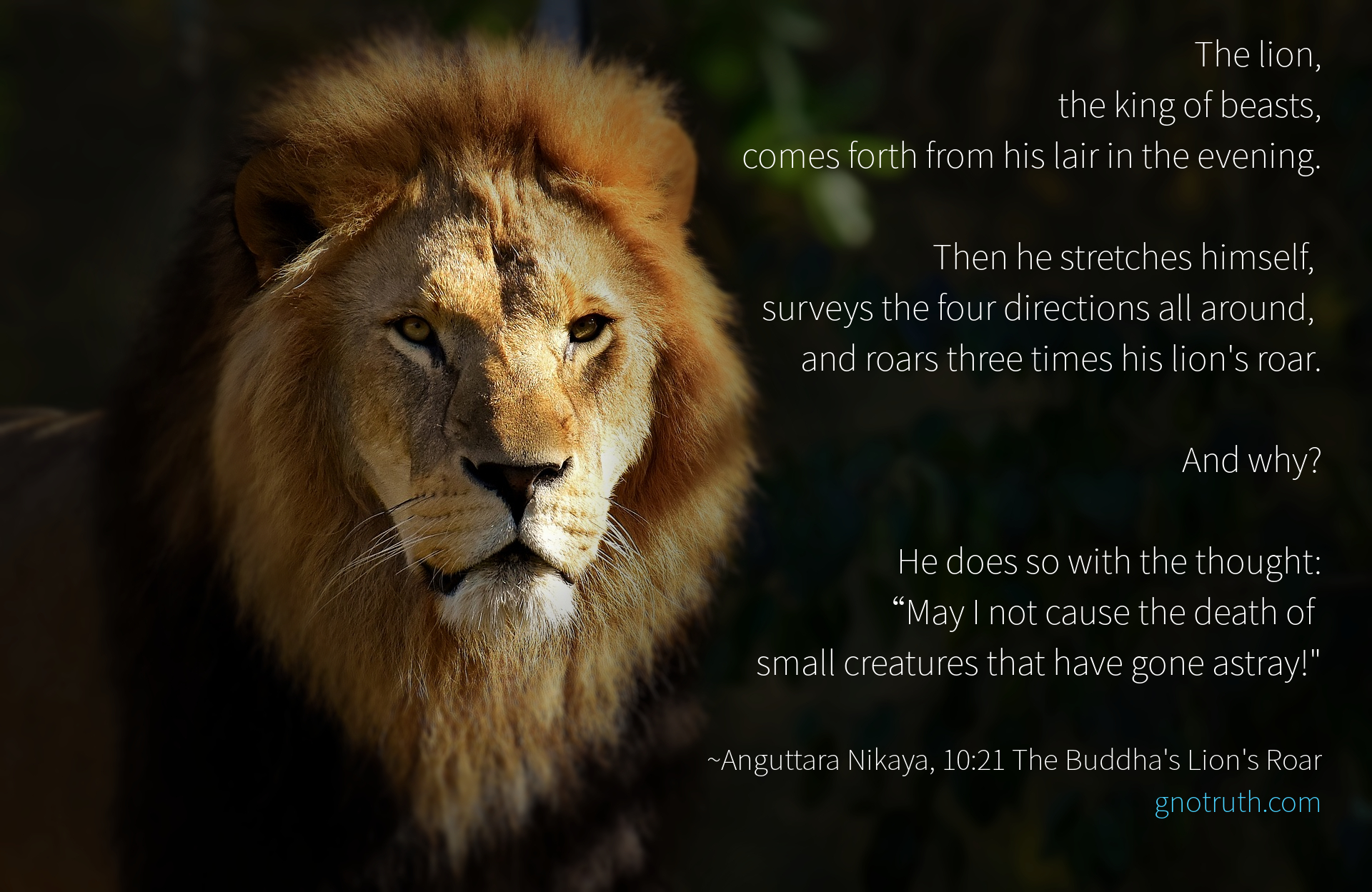 Lions Roar GnoTruth