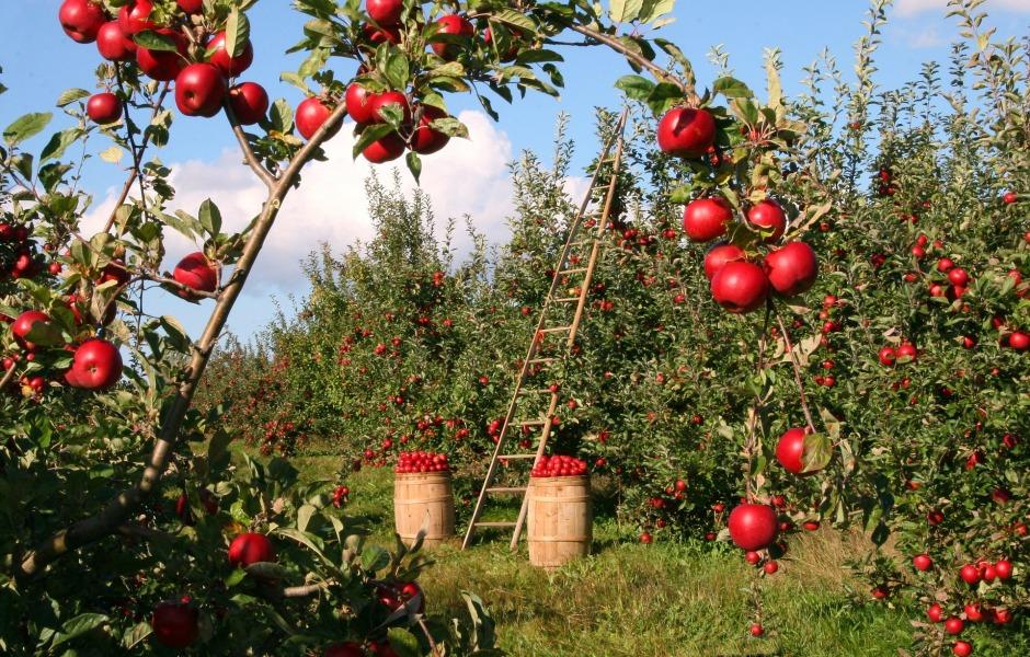 apple-1873078_1920
